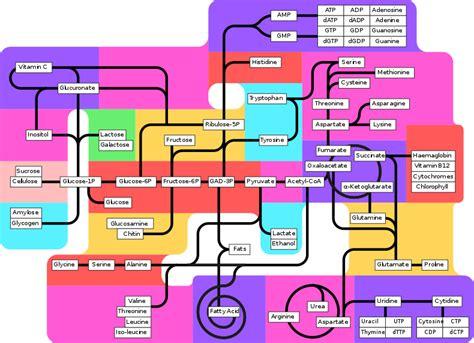 metabolic pathway wikipedia