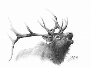 Elk Drawing by Larry-DEZ- Dismang