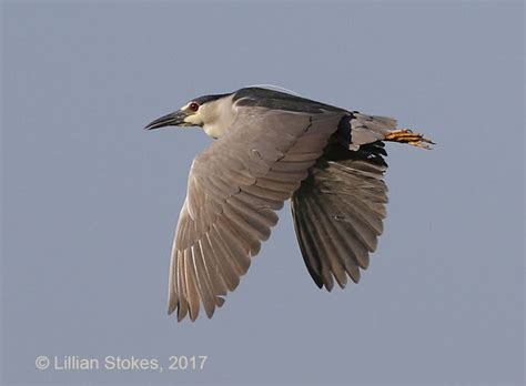 stokes birding blog