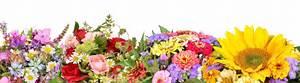 Blumen Bewässern Mit Wollfaden : blumen basar gbr in bremen ~ Lizthompson.info Haus und Dekorationen