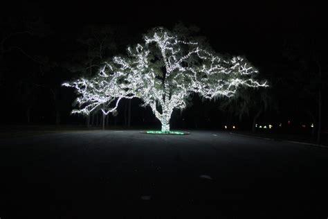 moss park s light up the wild orlando fl dec 13