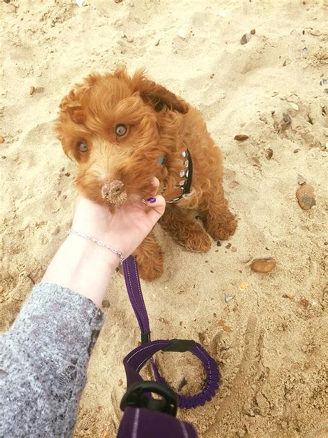 cycle dog stages key dogs puppy mad barking beach