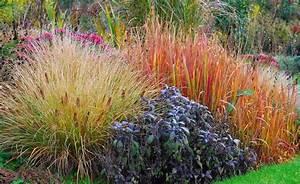 Ziergräser Im Garten Bilder : diese ziergr ser sorgen im herbst f r farbe felsenbirne leuchtende farben und laub ~ Sanjose-hotels-ca.com Haus und Dekorationen