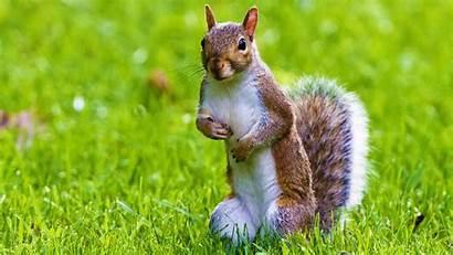 Animal Desktop Wallpapers Wild Squirrel