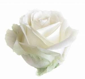 Fleur Rose Et Blanche : langage des roses blanches sur langage ~ Dallasstarsshop.com Idées de Décoration