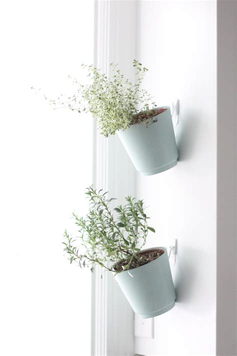 Window Sill Garden Planters by Diy Hanging Herb Garden Future Home Hanging Mugs On