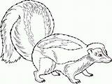 Skunk Coloring Pregnant Pages Ferret Printable Footed Getcoloringpages Getcolorings sketch template