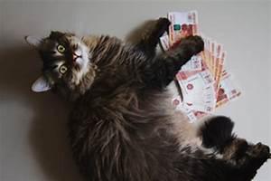 Was Kostet Eine Gute Matratze : was kostet eine katze im monat tierischehelden de ~ Bigdaddyawards.com Haus und Dekorationen