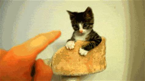 super cute animals    tough dose  funny
