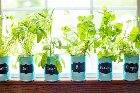 Window Sill Herb Garden Pots by How To Make An Indoor Window Sill Herb Garden The