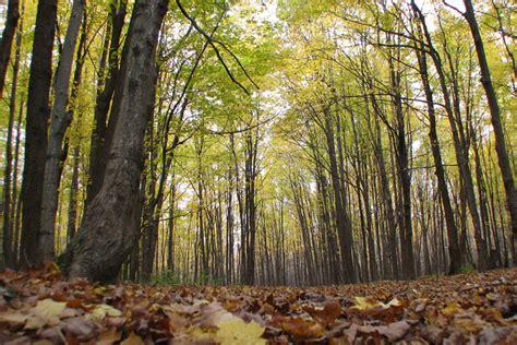 Retrouvé Après Trois Mois Perdu En Forêt