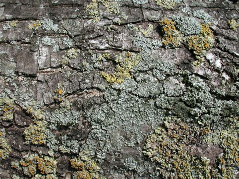 marble ground image after textures stone ground floor moss bark tree brown