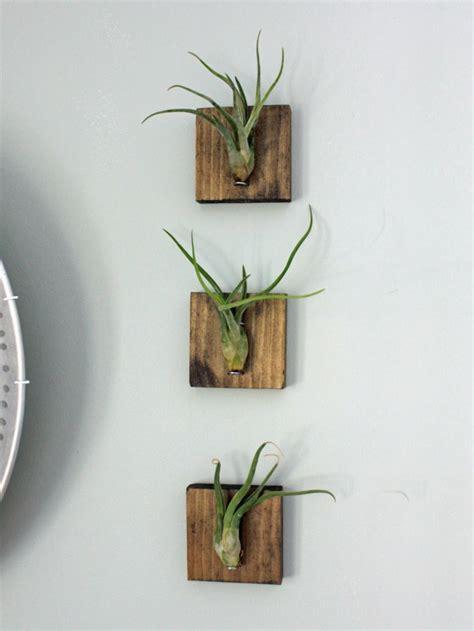table ovale cuisine plantes suspendues fonctionnelles et décoratives