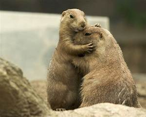 Open Thread for Personal Stuff: January 2016 Prairie Dog ...