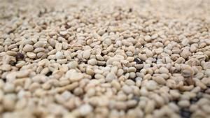 Kopi Luwak Zubereitung : kaffee fermentierung cafcaf kaffee blog kaffeeblog kaffee blog cafcaf alles rund um ~ Eleganceandgraceweddings.com Haus und Dekorationen