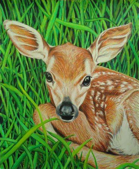 animal drawings jpg