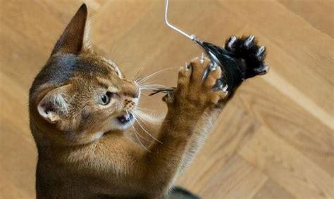 jeux pour chat maison jeux pour chats cinq id 233 es pour les fabriquer soi m 234 me animogen