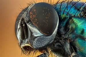 Se Débarrasser Des Mouches Naturellement : comment se d barrasser efficacement des mouches ~ Melissatoandfro.com Idées de Décoration