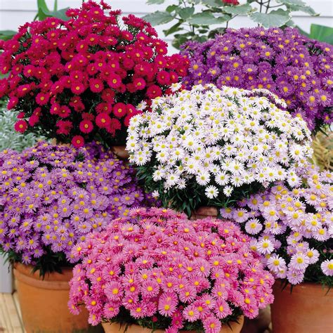 flower encyclopedia flowers and geography the flower expert flowers encyclopedia