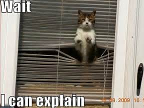 cat jokes for animal humor images cat wallpaper and background