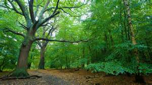 rent a canopy epping forest in southend on sea expedia ca