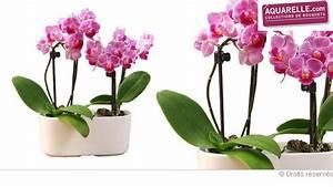 Cache Pot Orchidée : bouquet en pot part 4 ~ Teatrodelosmanantiales.com Idées de Décoration