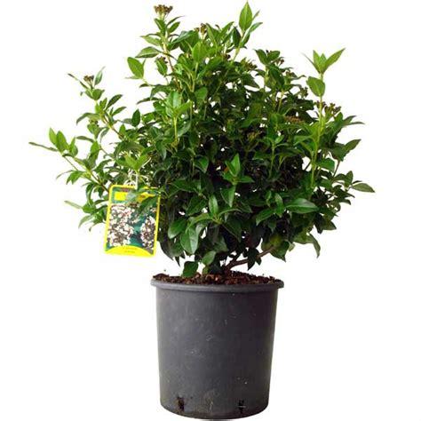 arrosage du laurier en pot 28 images garden centre de noville actualit 233 s gammes