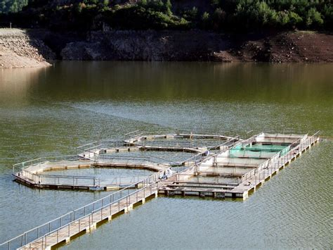 fish farming  pictures