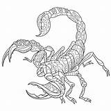Coloring Scorpio Animal Mandala Resolution Zodiac Adult Colouring Visit Animals Stylized Signs sketch template