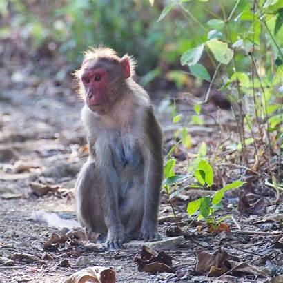 Animals India Urban Indiaphile Info