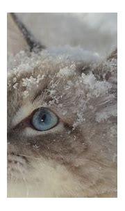 Animal Cat 1 4K 5K HD Animals Wallpapers   HD Wallpapers ...