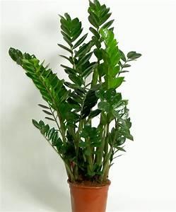 Plante D Intérieur : entretien plante grasse d interieur 9 achetez ~ Dode.kayakingforconservation.com Idées de Décoration