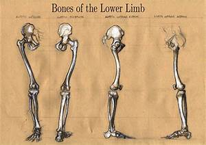 Michele Giorgi Illustrator   Anatomy Skethes  Bones Of The