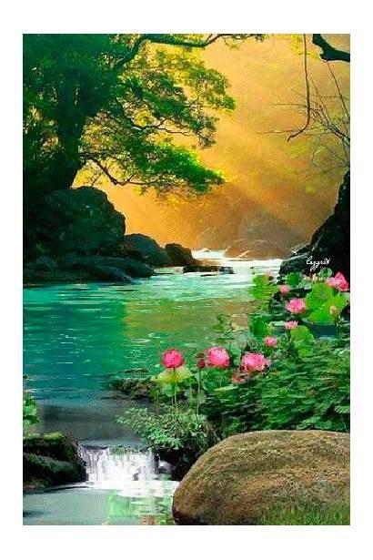 Natural Gifs Nature Salvo Scenes Se Natureza