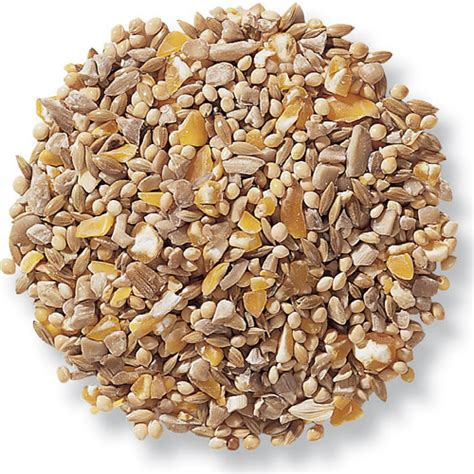 duncraft com duncraft 8705 four seasons no waste bird seed