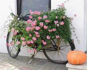 Balkonkästen Gestalten Ohne Blumen : wo ist mein fahrrad foto bild sonstiges naturkunst gestalten mit blumen bilder auf ~ Bigdaddyawards.com Haus und Dekorationen