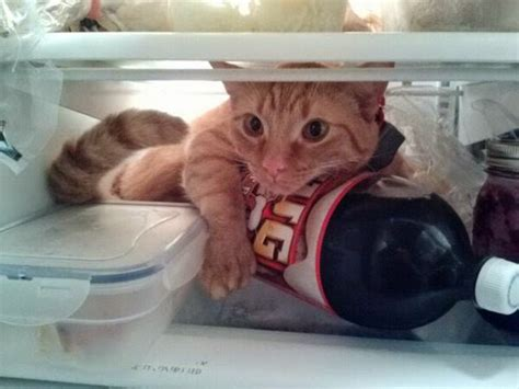 funny cats part   pics  gifs amazing creatures