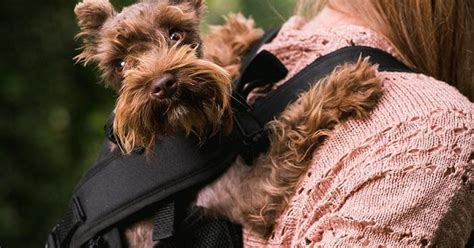 Coolest Gadgets And Gear For  Ee  Dogs Ee