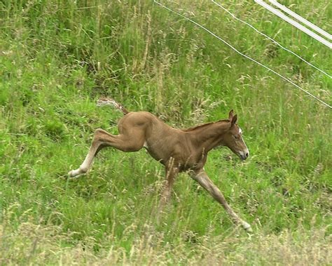 horse mclean asks andrew smart foals slow developers precocial