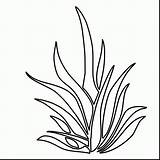 Coloring Plants Pages Plant Drawing Seaweed Underwater Grass Sea Ocean Shrubs Clipart Colouring Outlines Draw Printable Aquatic Pencil Kelp Seagrass sketch template