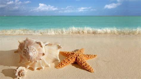 seashells  starfish wave swash sea hd wallpaper