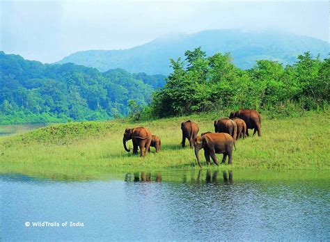 Complete List Of All Wildlife Sanctuaries Of Kerala, India