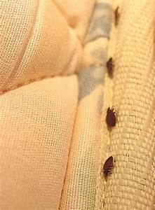 bedbugs in mattress covers With bed bugs not in bed