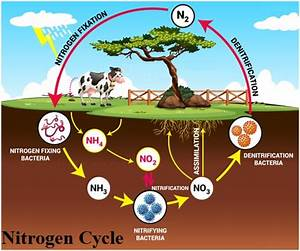 Cbse Class 9 Science Chapter Notes  Natural Resources