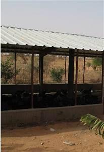 Fréquence Ponte Poule : memoire online installation d 39 une ferme avicole moderne dans la localit de niamey au niger ~ Melissatoandfro.com Idées de Décoration