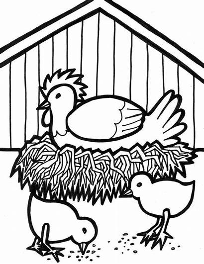 Chicken Coloring Pages Chicks