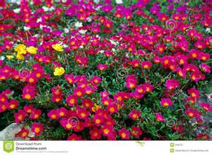 Jardin Des Fleurs Garderie by Pink Garden Flowers Royalty Free Stock Photography Image