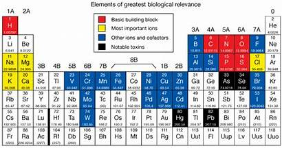 Periodic Elements Table Chemistry Biology Important Metals