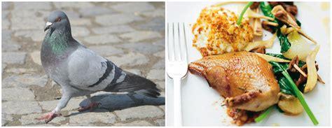 cuisine pigeon top 5 weirdest foods eat kozminski