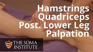 Palapation Of Hamstrings  Quadriceps And Posterior Lower